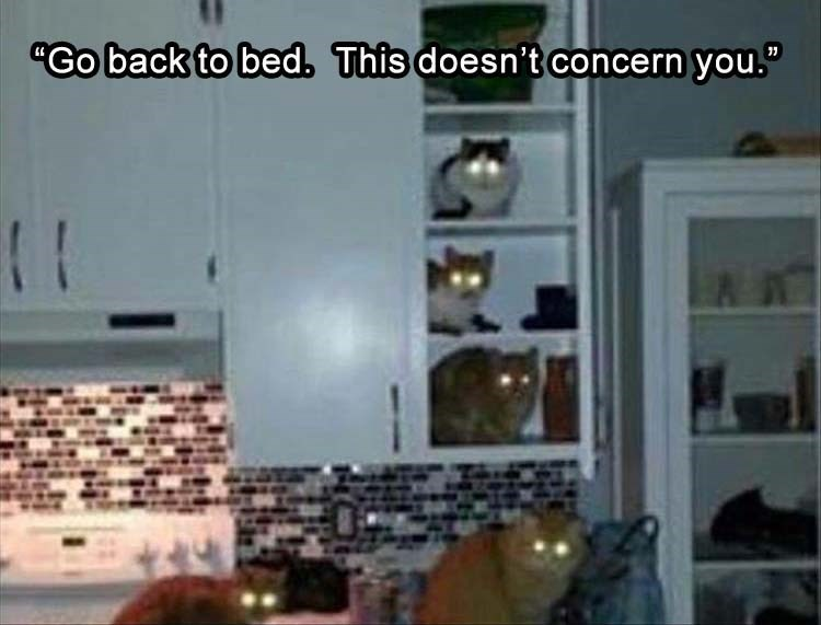 "cat meme - Property - ""Go back to bed. This doesn't concern you."""