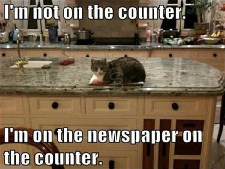 cat meme - Countertop - I'm not on the counter I'm on the newspaper on the counter.