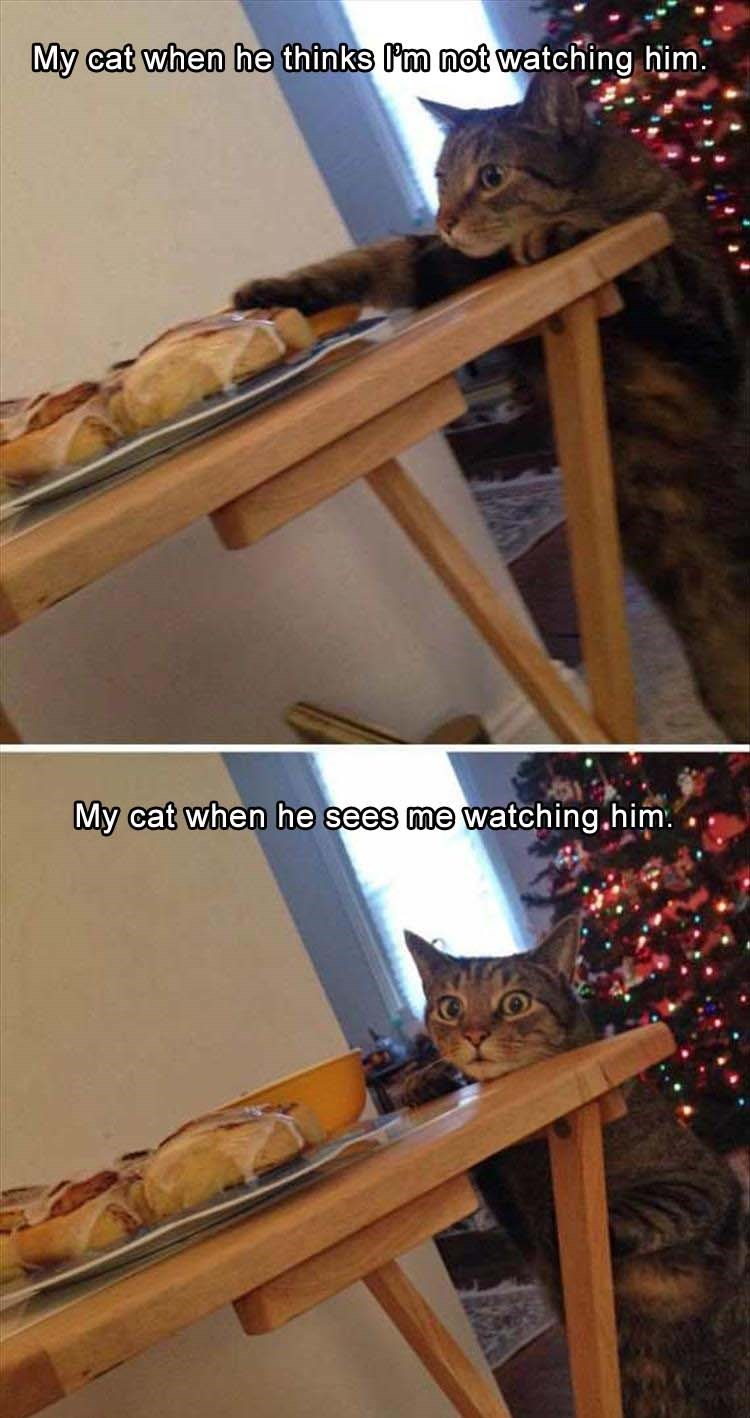cat meme - Wood - My cat when he thinks P'm not watching him. My cat when he sees me watching.him