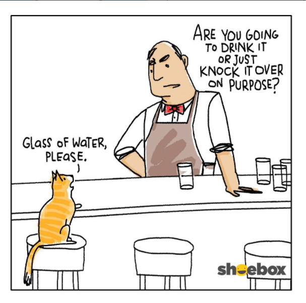photo of cat and bartender