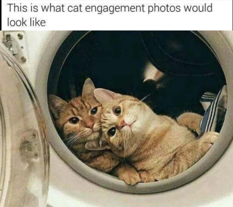 photo of two cats in the washing machine