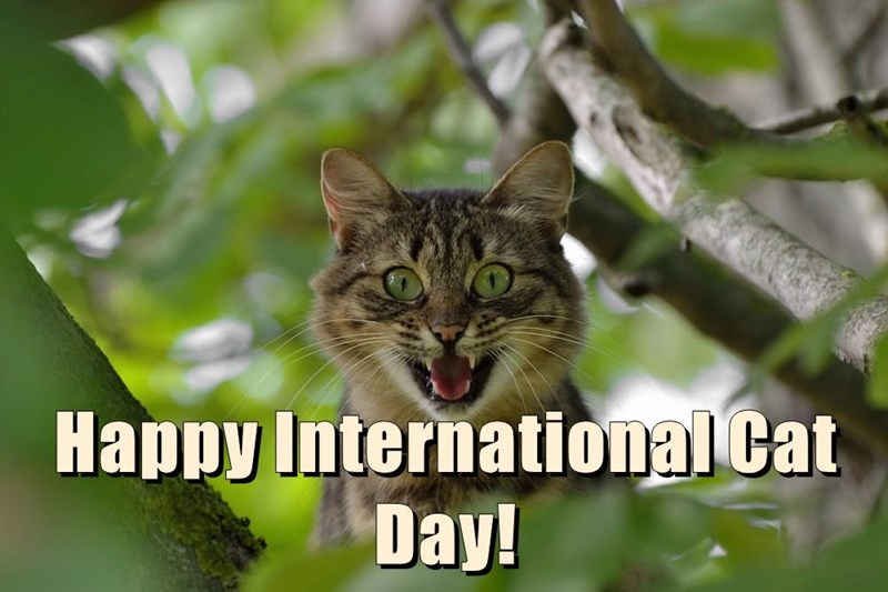 a cute meme saying that it's international cat day