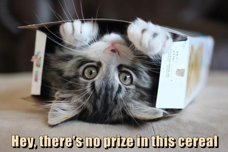 a funny cat meme of a cat in the eral box but saying there isnt a prize inside the book