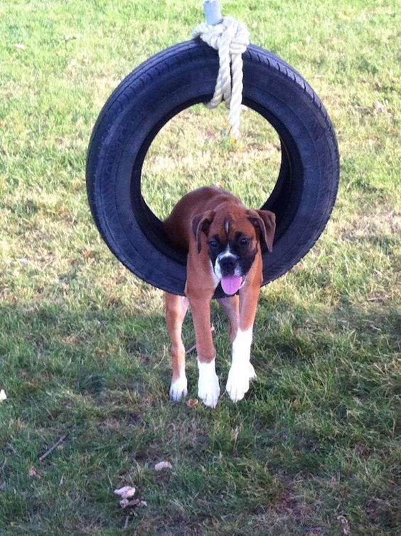dog just chilling in a tire swing, not really going back and forth much