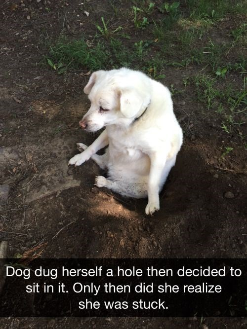 Snapchat of dog that dug a whole, got in, got stuck.