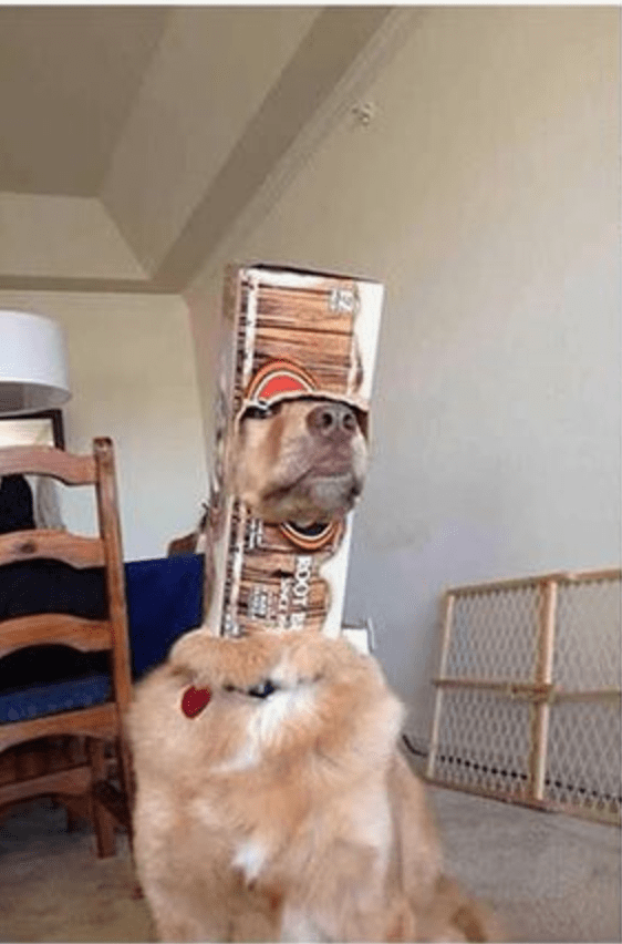 Dog wearing a bottle carton over his head.