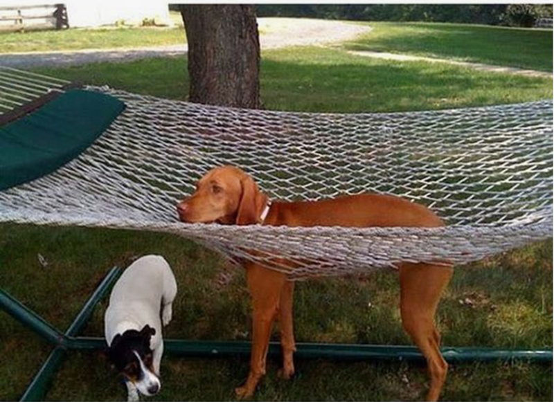 Dog in a hammock with his legs poking through the net and standing firmly on the ground before.