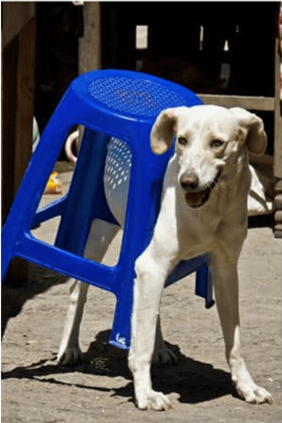 Funny pic of a dog wearing a stool