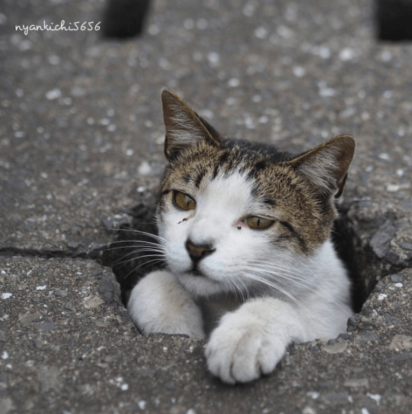 cute cat in a pot hole