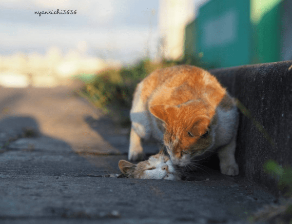 Street cats affection