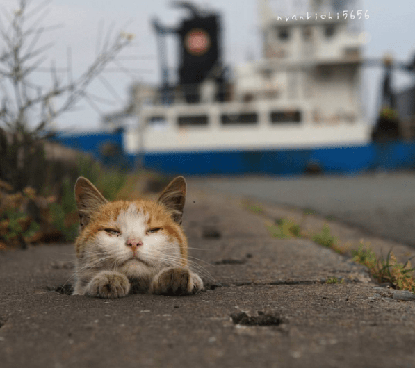 Street cat and paws in a pot hole