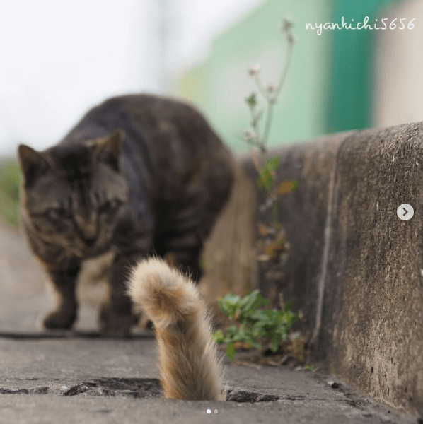 tail of the street cat