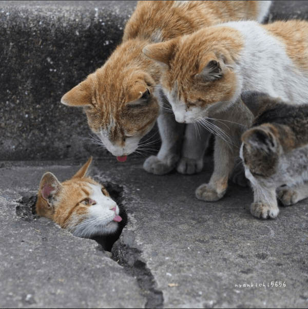 street cats inspecting a crevice in which another street cat is hiding.