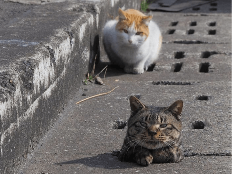 street cats peeking out of a storm drain