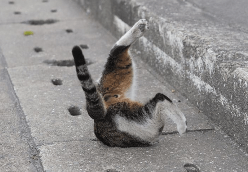 cat stuck in a pot hole with his feet sticking out in the air