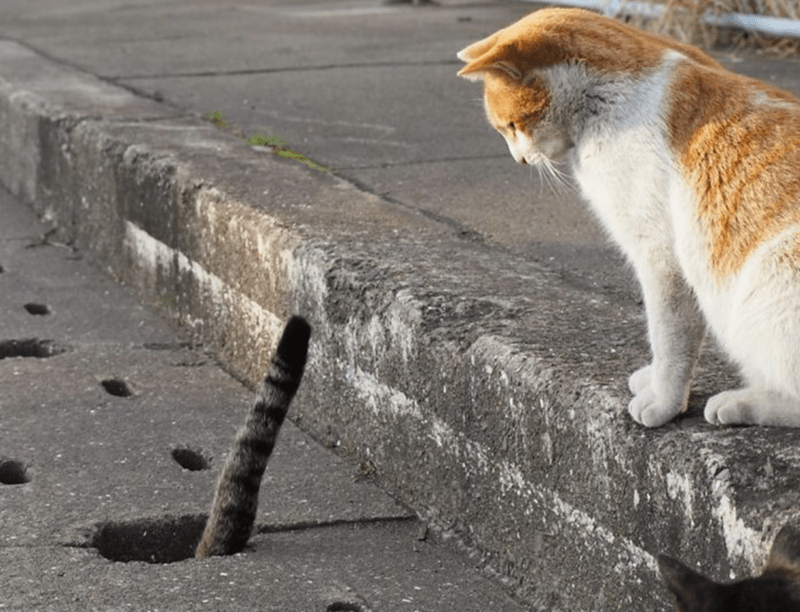 Street cat tail sticking out of the ground.