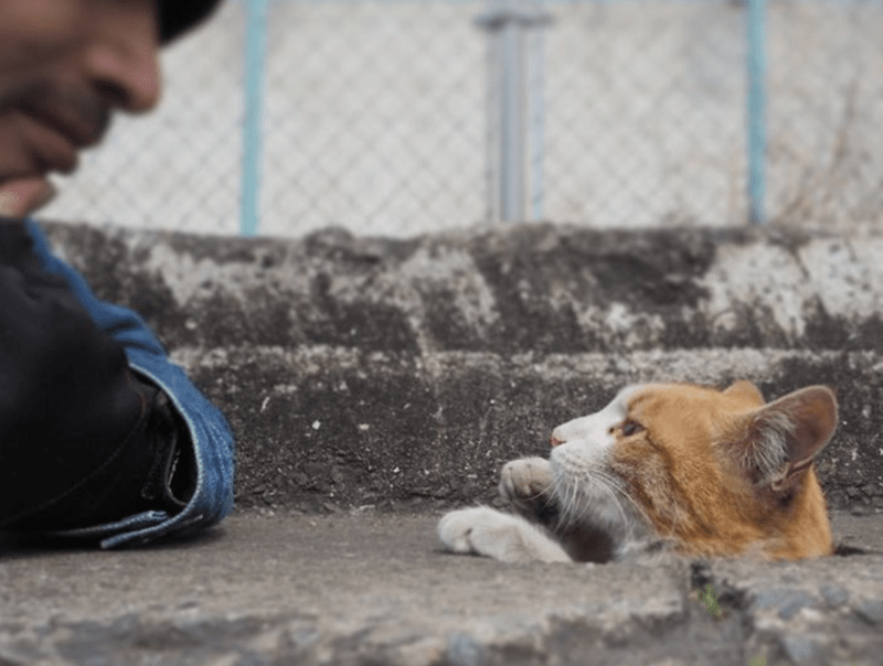 befriending the street cat