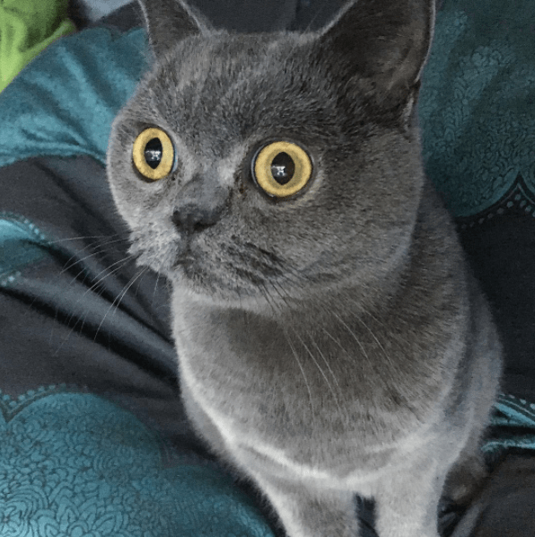 cat with wide open radar eyes