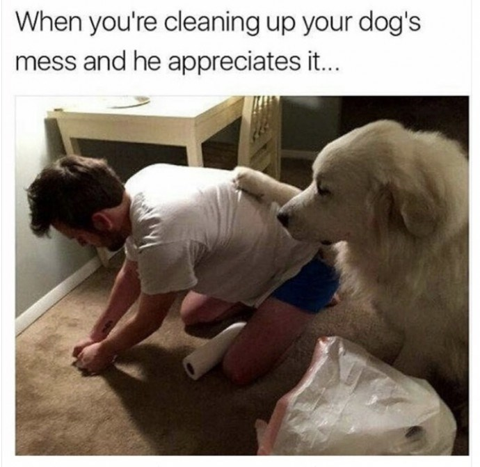 photo of a dog appreciating his owner cleaning after him