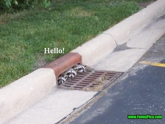 Public space - Hello! www.FunnyPica.com