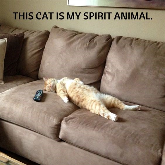 lazy cat on the couch is my spirit animal