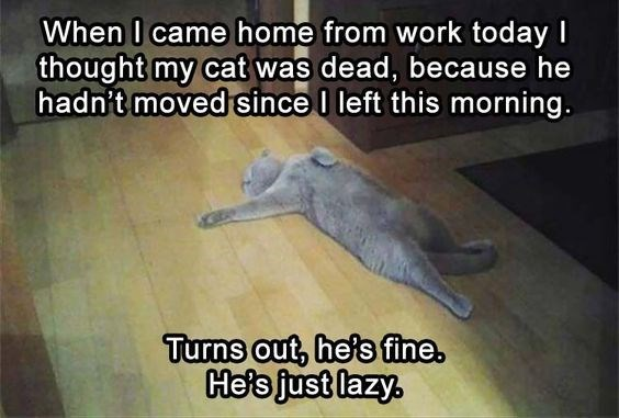 funny lazy cat meme