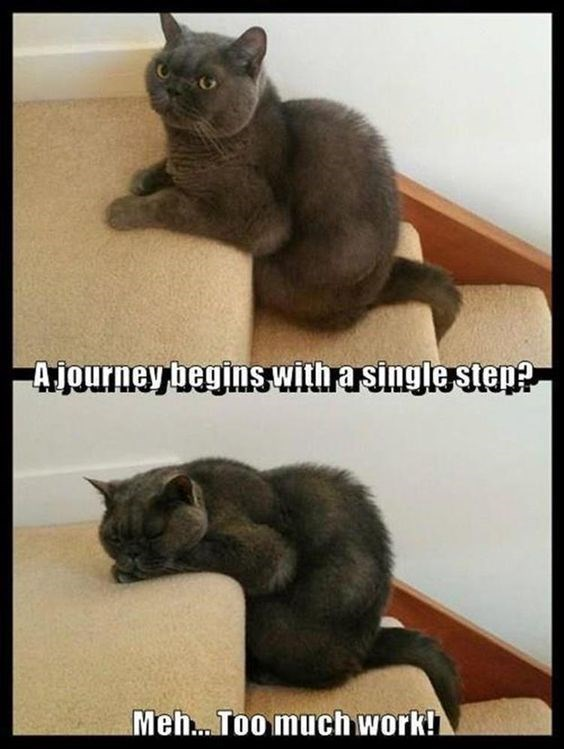funny cat meme about a journey beginning with a single step.