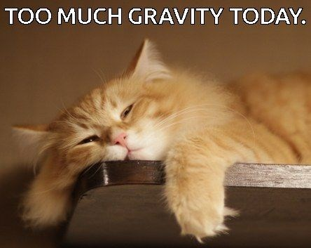 Funny cat meme about too much gravity