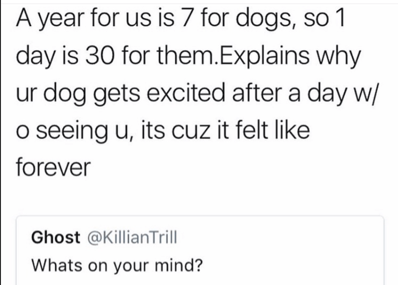 Text - A year for us is 7 for dogs, so 1 day is 30 for them.Explains why ur dog gets excited after a day w/ O seeing u, its cuz it felt like forever Ghost @KillianTrill Whats on your mind?