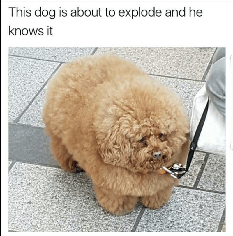 Dog - This dog is about to explode and he knows it