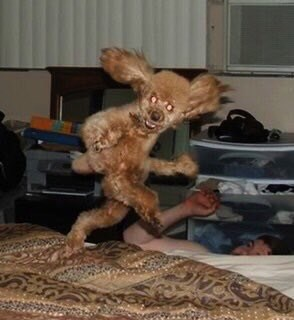 cursed image-dog looking like it's running over a bed