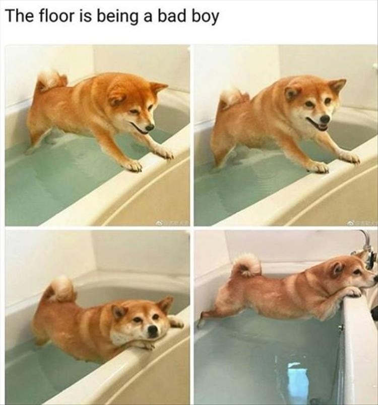 photo of dog trying not to touch the water in the bath tub