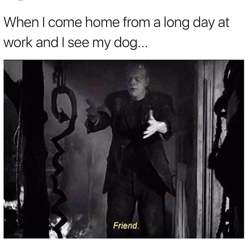 Funny meme about being reunited with dog after a long day at work.