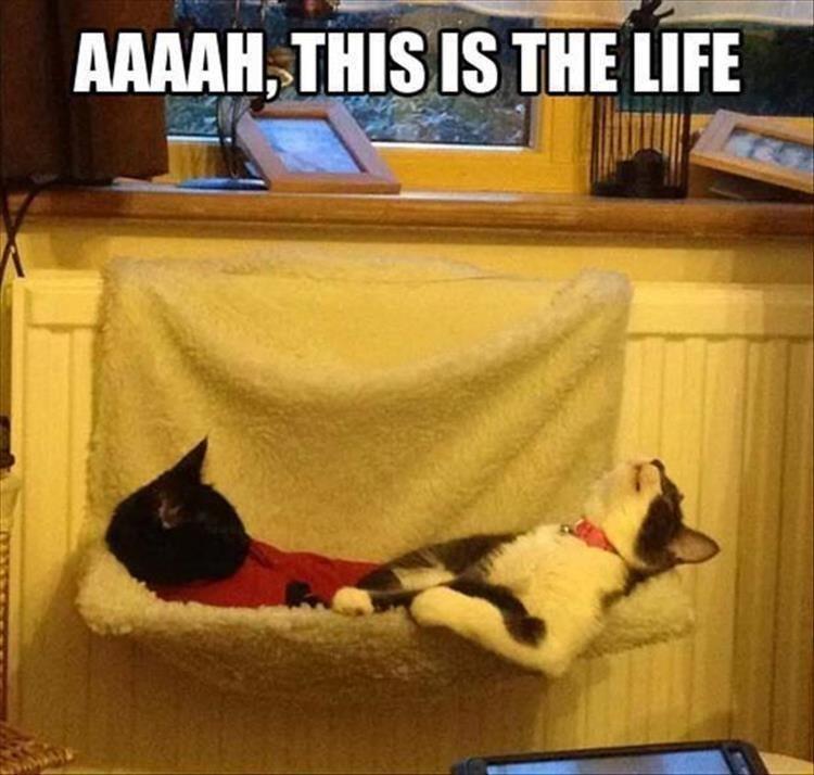 Memes Cats funny - 9063399424