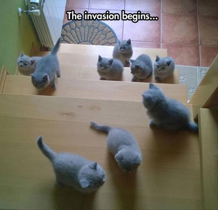 Memes Cats funny - 9063401216