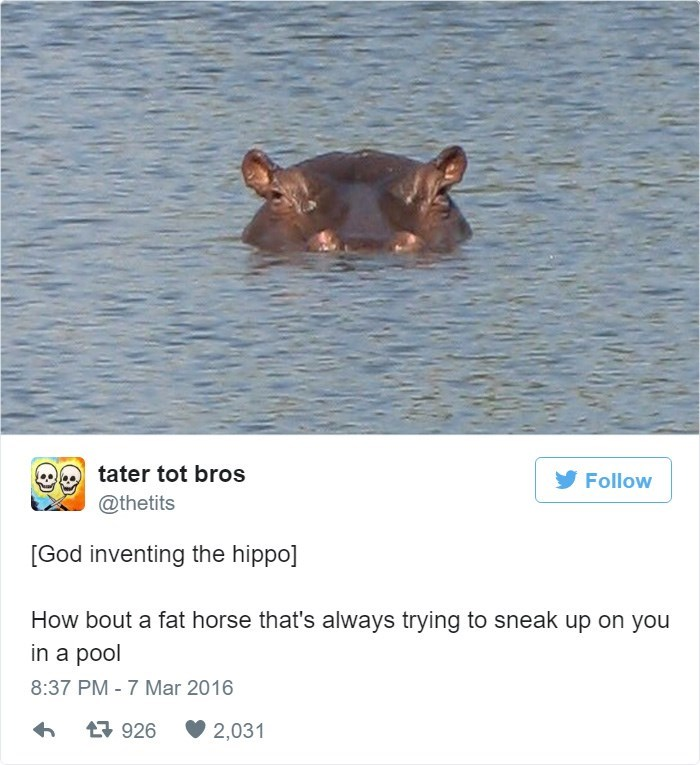 Organism - tater tot bros Follow @thetits [God inventing the hippo] How bout a fat horse that's always trying to sneak up on you in a pool 8:37 PM - 7 Mar 2016 t926 2,031