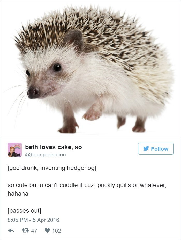 Erinaceidae - beth loves cake, so Follow @bourgeoisalien [god drunk, inventing hedgehog] so cute but u can't cuddle it cuz, prickly quills or whatever, hahaha passes out] 8:05 PM -5 Apr 2016 47 102