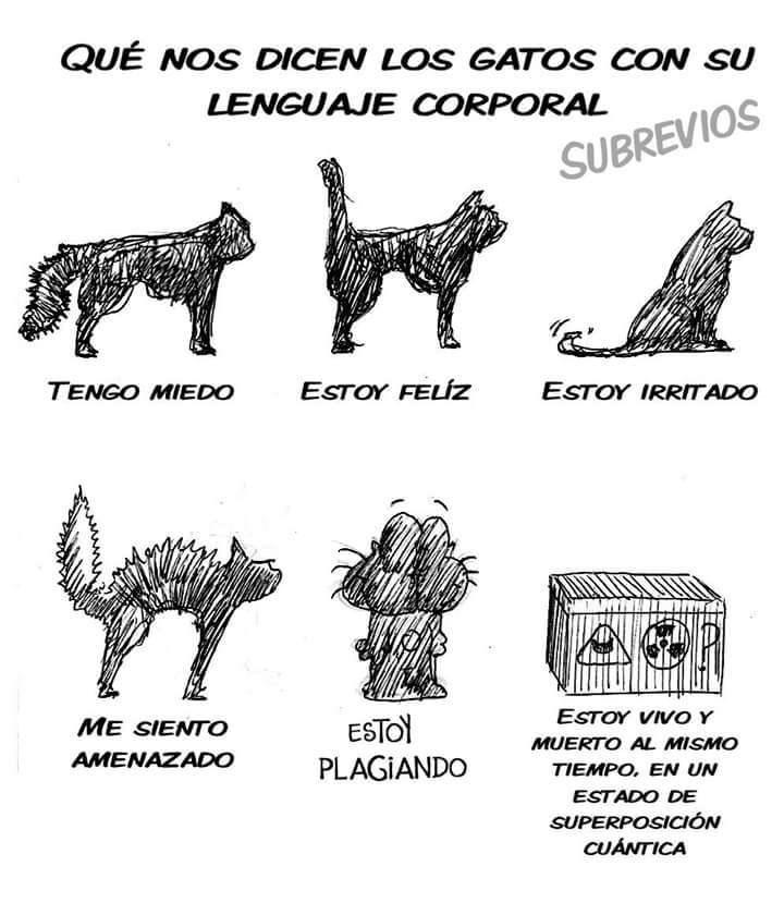 comic que explica lo que nos dice el lenguaje corporal de los gatos