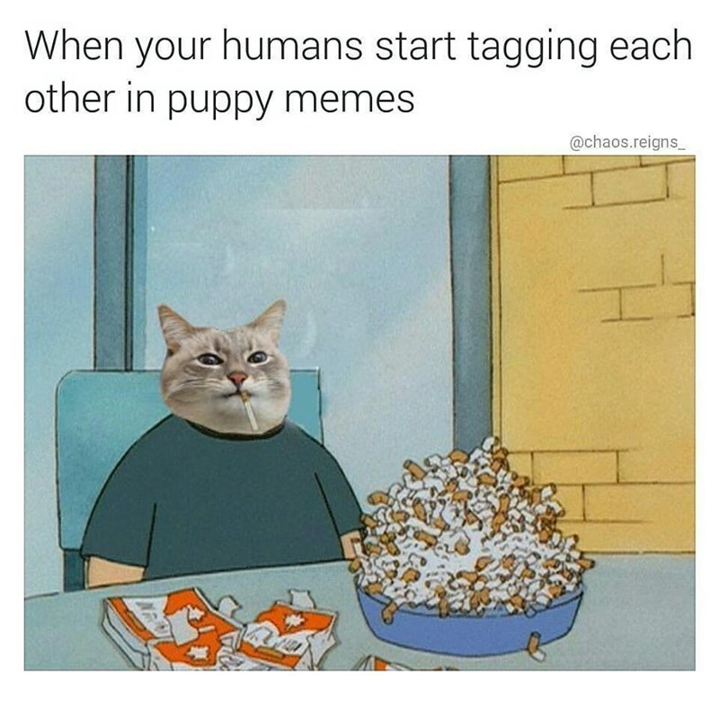 Funny meme of cat chainsmoking about humans tagging each other in puppy/dog memes.