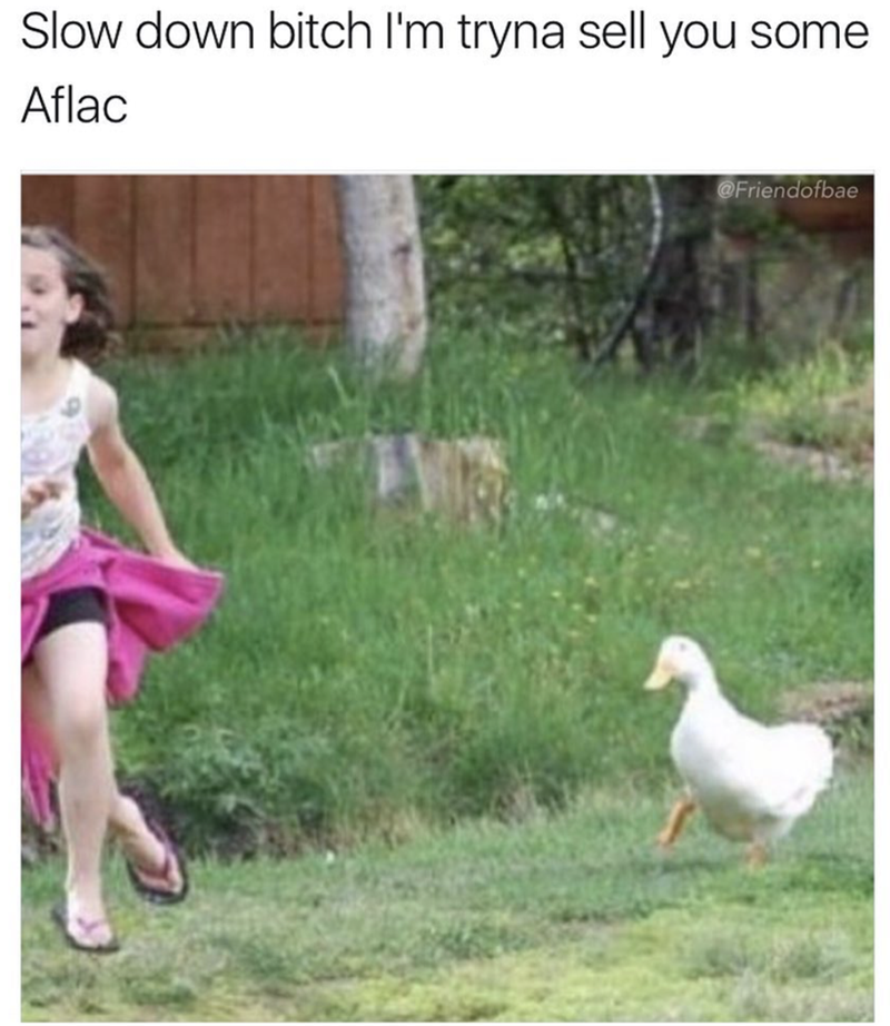 meme - Duck - Slow down bitch I'm tryna sell you some Aflac @Friendofbae