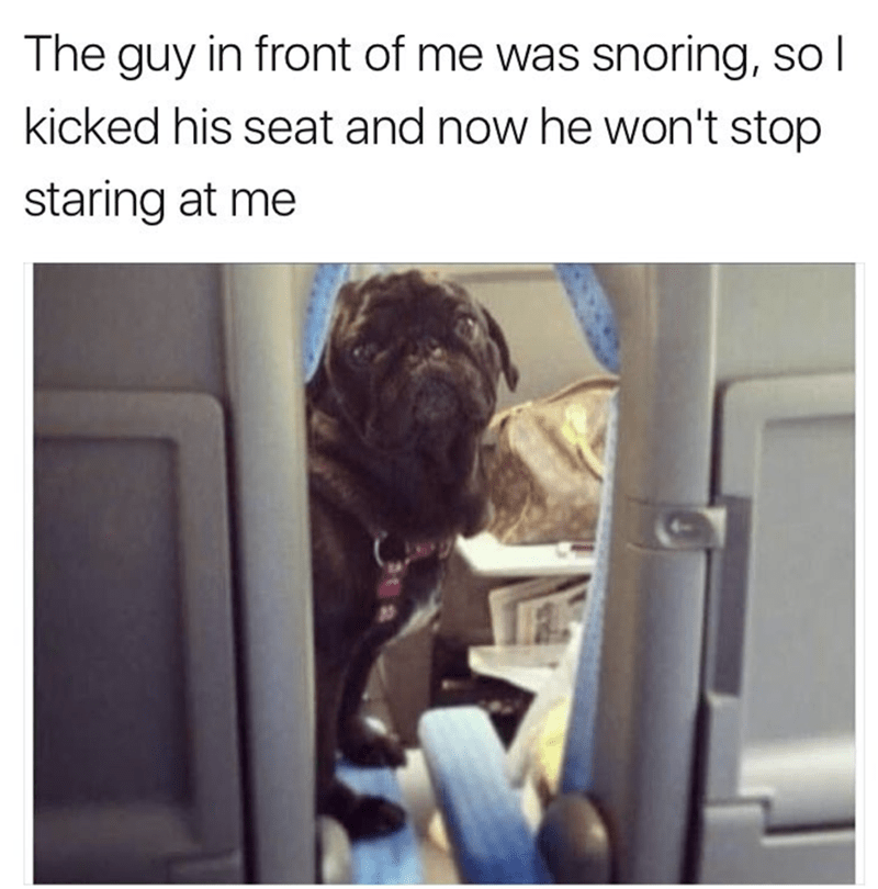 meme - Text - The guy in front of me was snoring, so l kicked his seat and now he won't stop staring at me