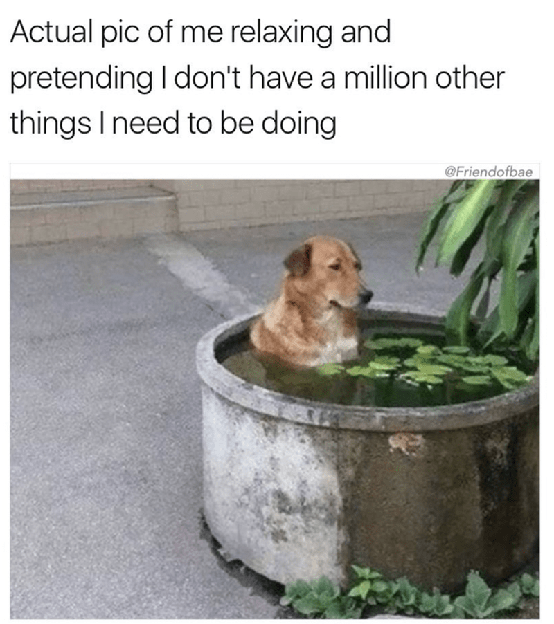 meme - Canidae - Actual pic of me relaxing and pretending I don't have a million other things I need to be doing @Friendofbae