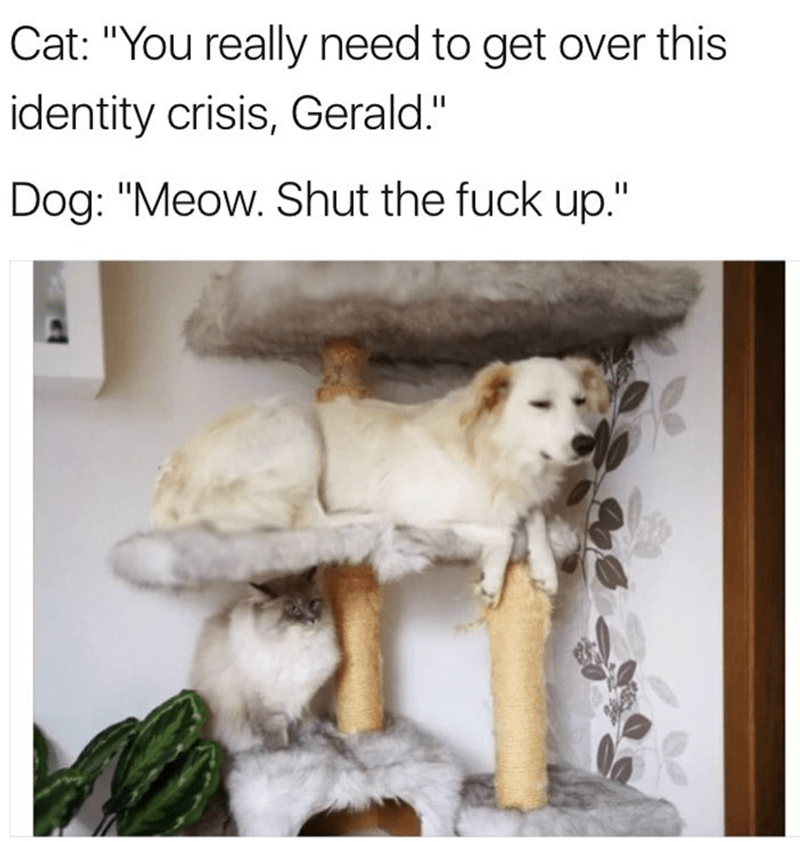 """meme - Dog - Cat: """"You really need to get over this identity crisis, Gerald."""" Dog: """"Meow. Shut the fuck up."""""""