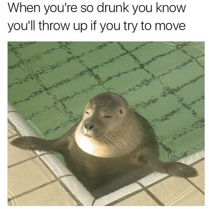 meme - Seal - When you're so drunk you know you'll throw up if you try to move @dabmoms