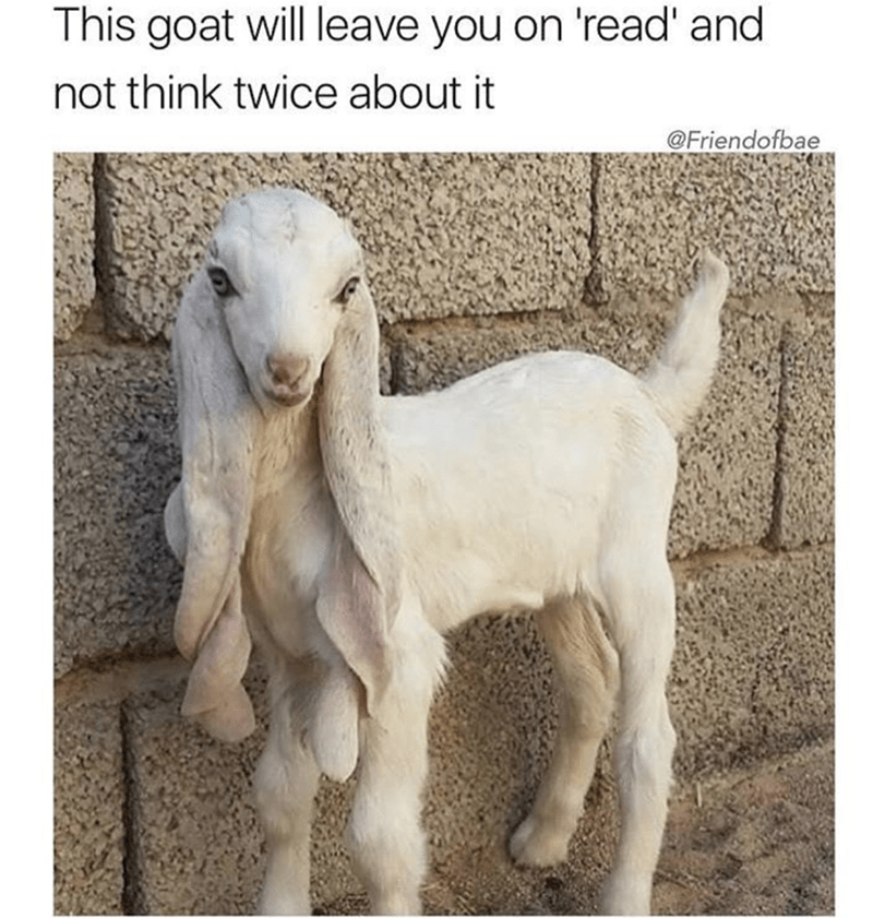 meme - Goats - This goat will leave you on 'read' and not think twice about it @Friendofbae
