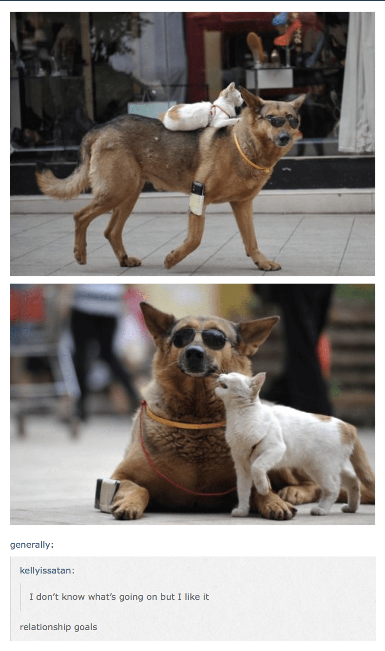 meme - Vertebrate - generally: kellyissatan: I don't know what's going on but I like it relationship goals
