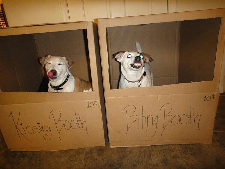 Funny meme about having a kissing booth and a biting booth for your dog.