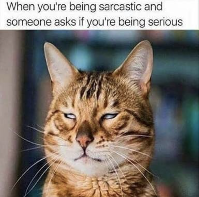 Cat - When you're being sarcastic and someone asks if you're being serious