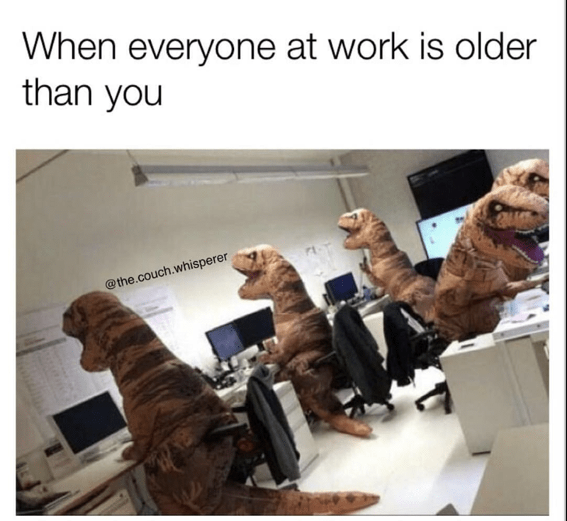 Dog - When everyone at work is older than you @the.couch.whisperer