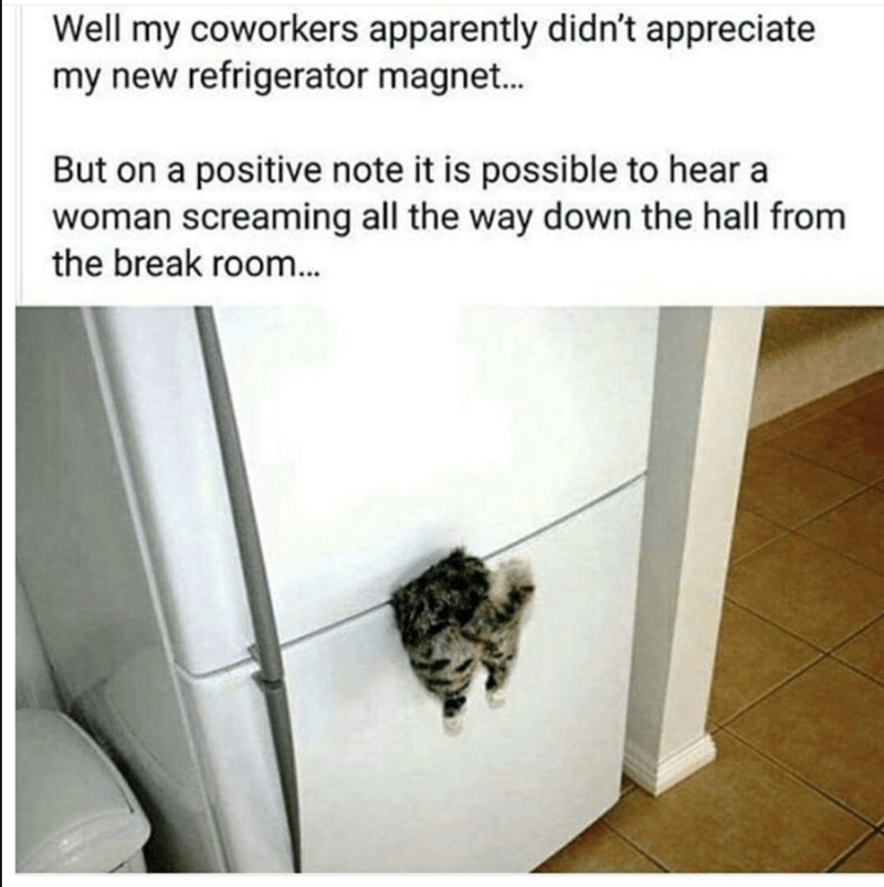 funny meme of a picture of a cat refrigerator magnet that looks like kitty got stuck in the fridge